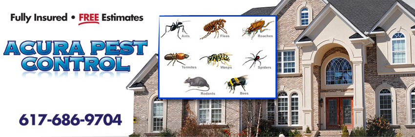 Acura Pest Control - Fully Insured - FREE Estimates - 617-686-9704